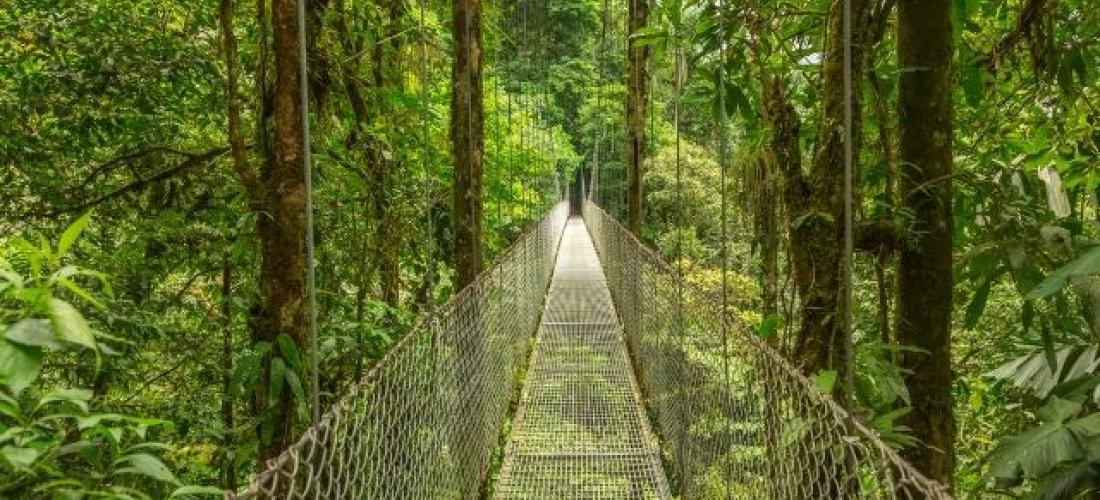 A 4x4 jungle adventure in Costa Rica, San José, Tortuguero National Park, Arenal, Monteverde, Rincon de la Vieja and Tamarindo, Costa Rica